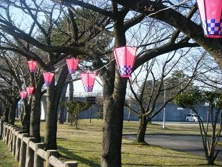 水族館桜 005