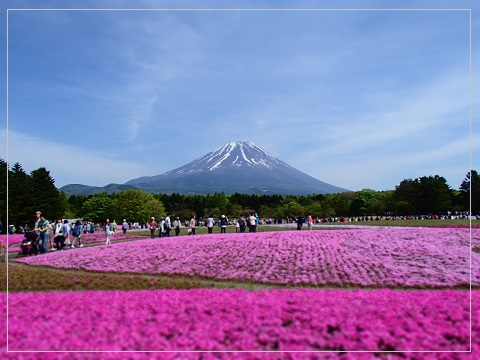 150511shibazakura15.jpg
