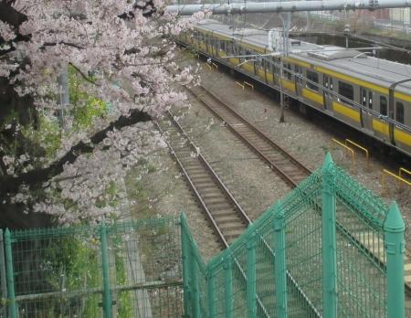 2015東中野の桜1