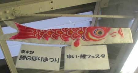 2015東中野鯉フェス緋鯉