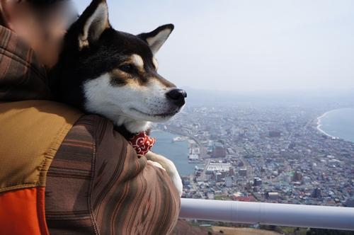 函館観光⑯