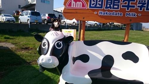 函館牛乳②