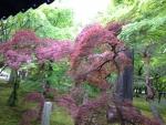 2015京都東福寺その5
