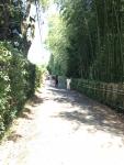 2015年京都嵐山竹林の径その1