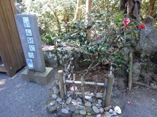 26金剛頂寺-椿26