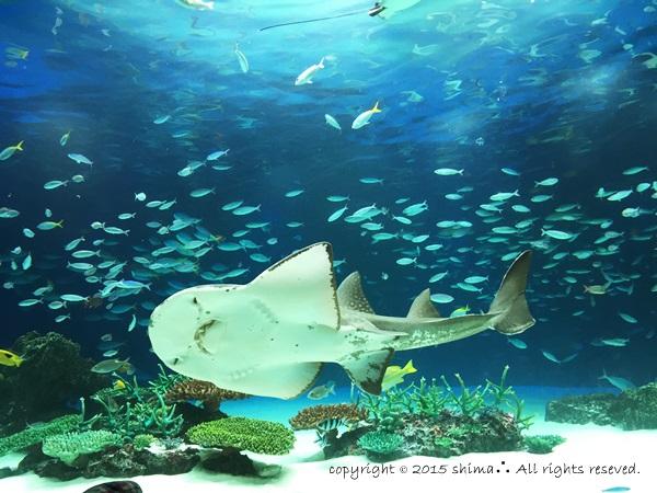 20150819サンシャイン水族館3