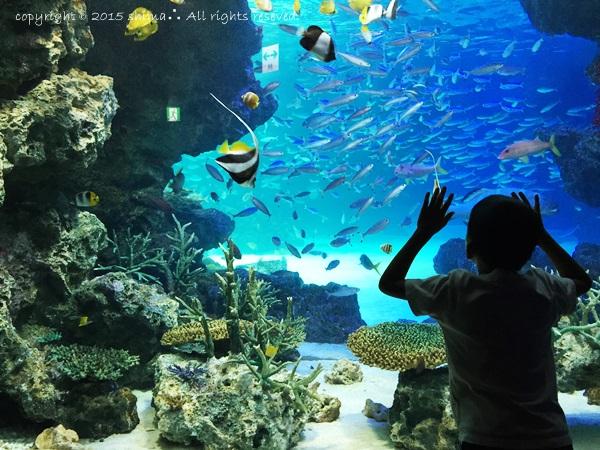 20150819サンシャイン水族館2