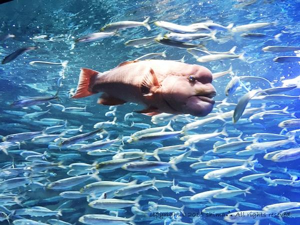 20150819サンシャイン水族館1