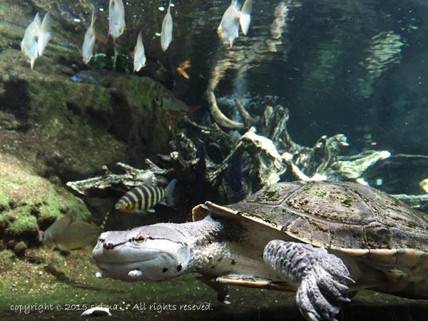 20150819サンシャイン水族館9