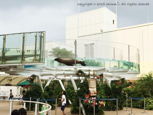 20150819サンシャイン水族館6