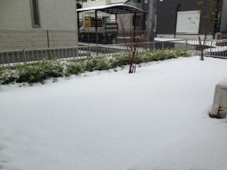 yuki (1)