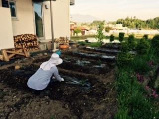 家庭菜園20150517