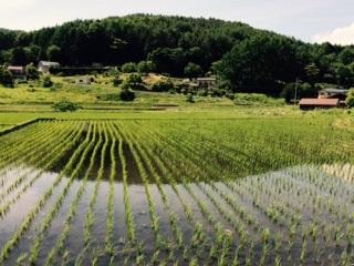 田んぼ20150610