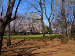 桜を見物に散歩してきました。