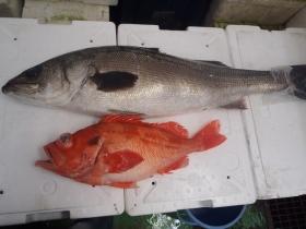 3鮮魚セット20141231