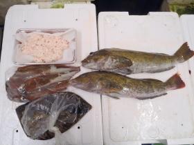 2鮮魚セット2015131