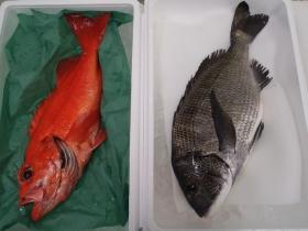 8鮮魚セット2015131