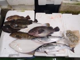 11鮮魚セット2015131