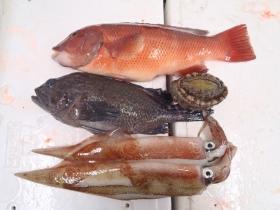 12鮮魚セット2015131