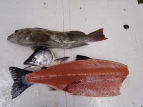 8鮮魚セット2015228