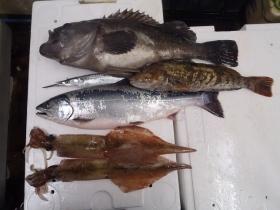 8鮮魚セット2015331