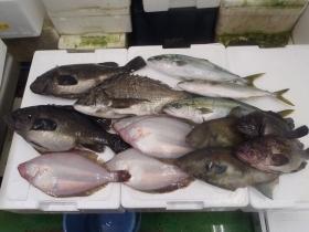 2鮮魚セット2015430