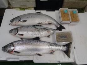 8鮮魚セット2015430