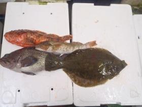18鮮魚セット2015430
