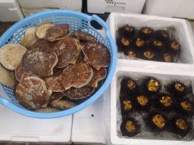 5鮮魚セット2015530