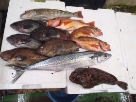 10鮮魚セット201561