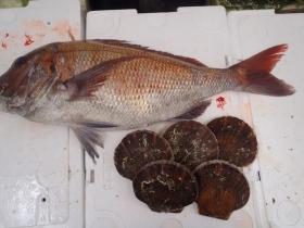 11鮮魚セット201561