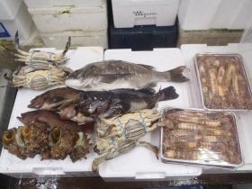 14鮮魚セット201564