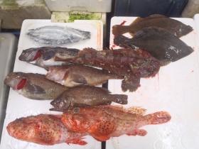 15鮮魚セット201564