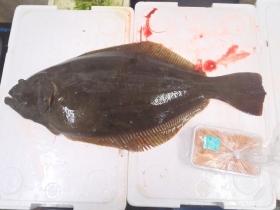 16鮮魚セット201564