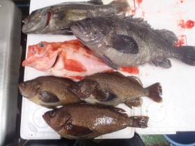 18鮮魚セット201564