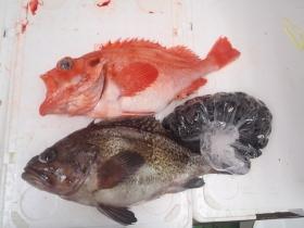 21鮮魚セット201564