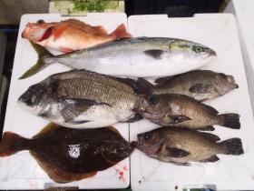 14鮮魚セット2015615
