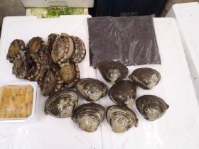 15鮮魚セット2015615