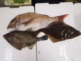 25鮮魚セット2015615