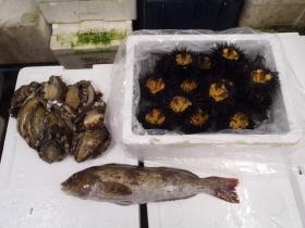 1鮮魚セット2015616