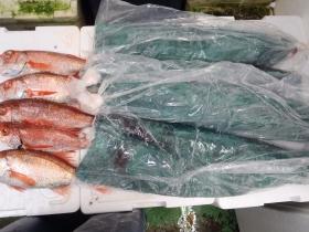 6鮮魚セット2015616