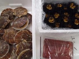 13鮮魚セット2015616