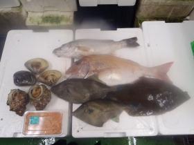 22鮮魚セット2015616