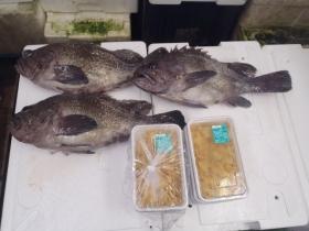 2鮮魚セット2015618