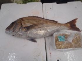 13鮮魚セット2015618