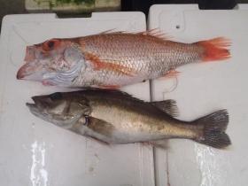 18鮮魚セット2015618