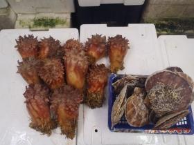 17鮮魚セット2015618