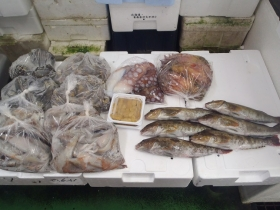 1鮮魚セット2015619