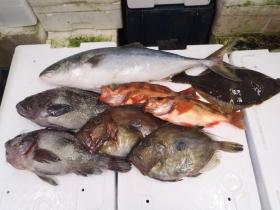 3鮮魚セット2015622