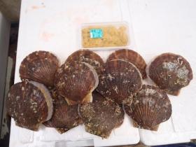 8鮮魚セット2015622
